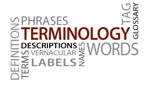 Word, terminology translation
